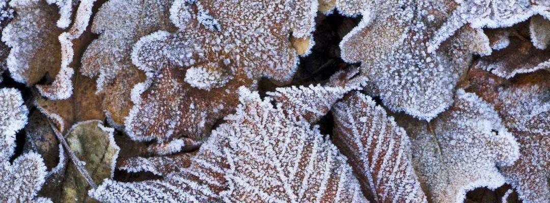 Januari: tuintips