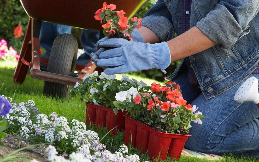 Maart: planten